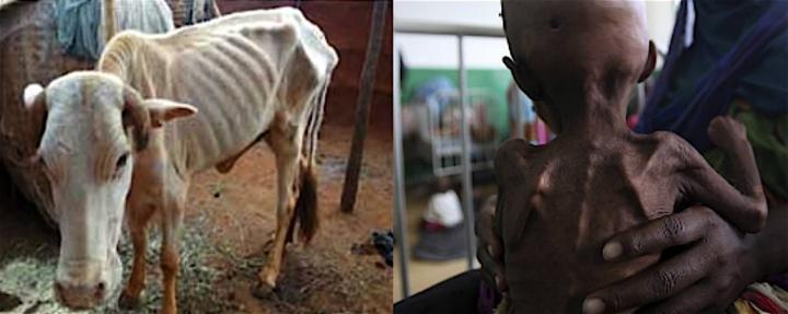 Foamete - copii si vaci emaciate in Africa