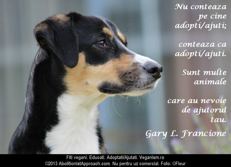 Nu conteaza pe cine adopti/ajuti