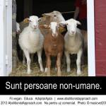 Sunt persoane non-umane
