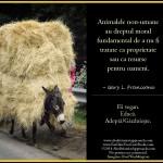 Animalele non-umane au dreptul moral fundamental