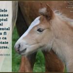 Animalele non-umane au dreptul moral fundamental de a nu fi tratate ca proprietate sau resurse