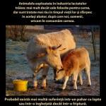 Nu există nicio diferenţă semnificativă între consumul de carne sau lapte și cel al altor produse de origine animală