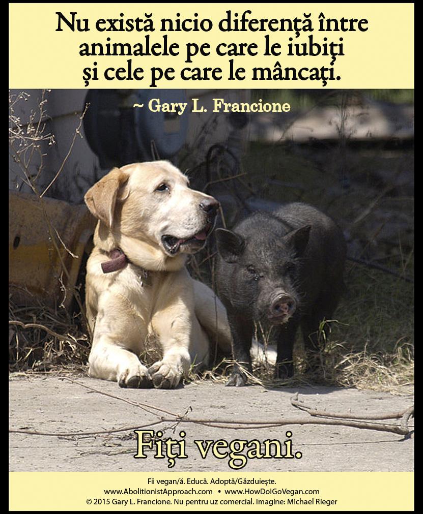 Nu există nicio diferență între animalele pe care le iubiți și cele pe care le mâncați