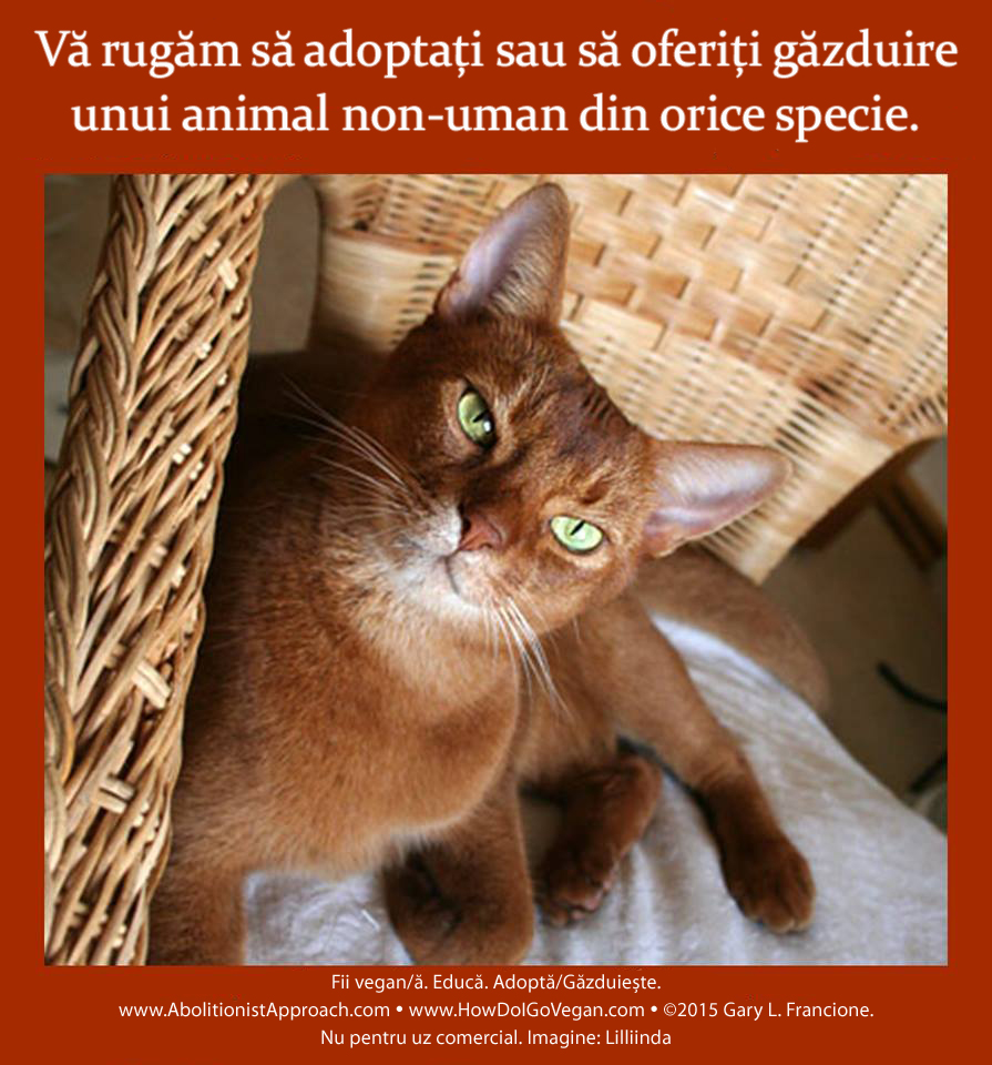 Vă rugăm să adoptați sau să oferiți găzduire unui animal non-uman din orice specie